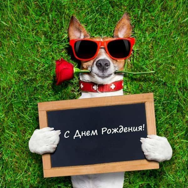 собака поздравляка