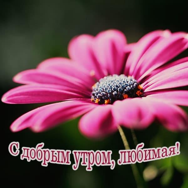 С добрым утром картинки с пожеланиями девушке_7