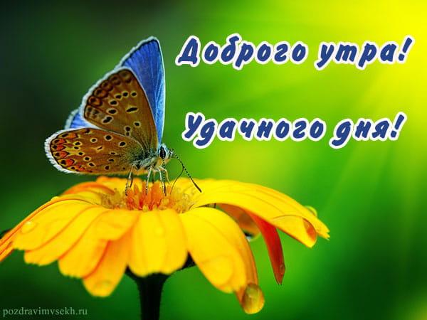 доброго утра удачного дня, картинка с цветком и бабочкой