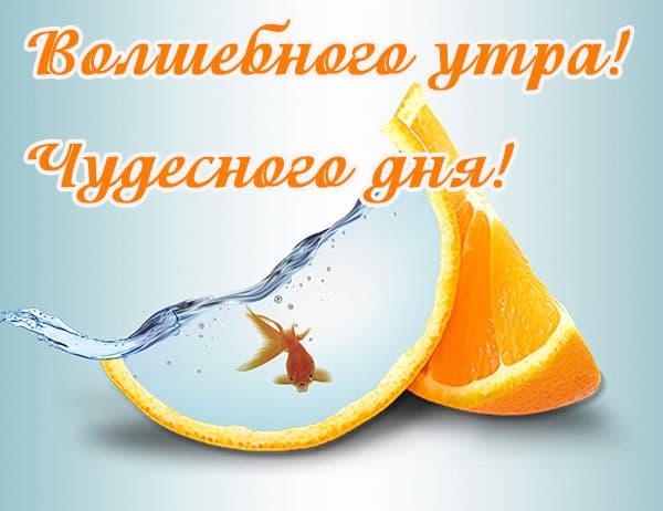волщебного утра, чудесного дня, золотая рыбка в апельсине фэнтези