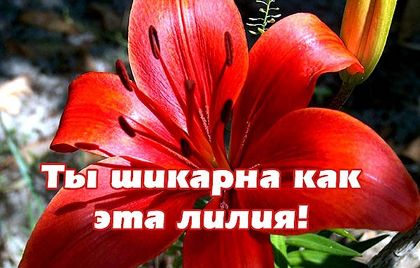комплимент девушке_9
