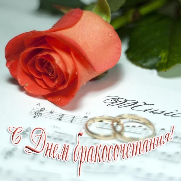 с днем бракосочетания, роза и кольца