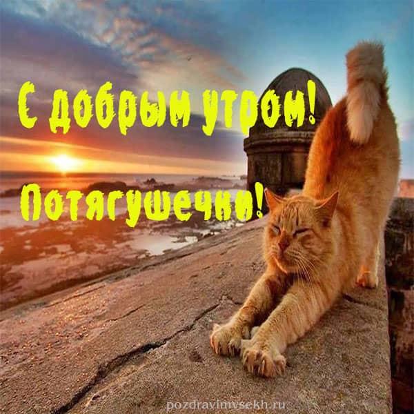 картинка с добрым утром потягушечки, кот потягивается