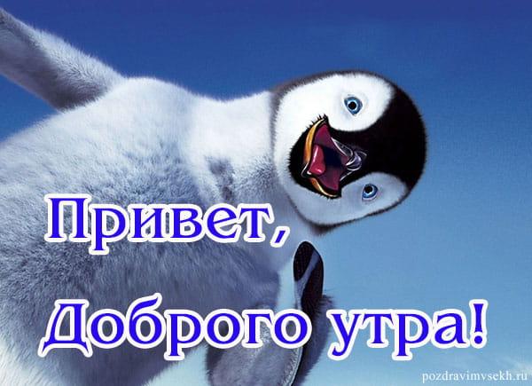 пингвин на картинке привет, с добрым утром