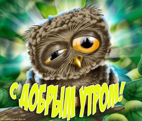 с добрым утром картинка с совой