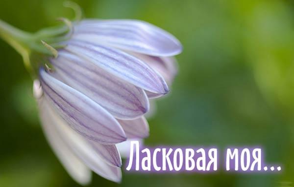 комплимент девушке_4