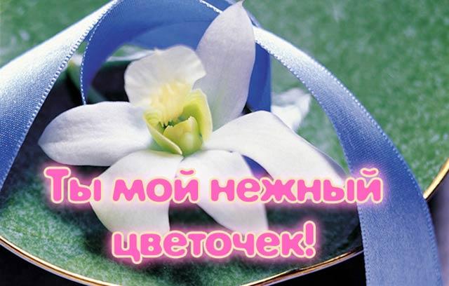 комплимент девушке ты мой нежный цветочек